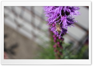 Wasp in a Flower HD Wide Wallpaper for Widescreen