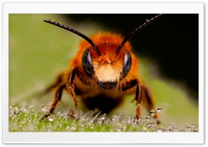 Wasps HD Wide Wallpaper for Widescreen