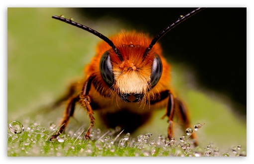 Wasps HD wallpaper for Standard 4:3 5:4 Fullscreen UXGA XGA SVGA QSXGA SXGA ; Wide 16:10 5:3 Widescreen WHXGA WQXGA WUXGA WXGA WGA ; HD 16:9 High Definition WQHD QWXGA 1080p 900p 720p QHD nHD ; Other 3:2 DVGA HVGA HQVGA devices ( Apple PowerBook G4 iPhone 4 3G 3GS iPod Touch ) ; Mobile VGA WVGA iPhone iPad PSP Phone - VGA QVGA Smartphone ( PocketPC GPS iPod Zune BlackBerry HTC Samsung LG Nokia Eten Asus ) WVGA WQVGA Smartphone ( HTC Samsung Sony Ericsson LG Vertu MIO ) HVGA Smartphone ( Apple iPhone iPod BlackBerry HTC Samsung Nokia ) Sony PSP Zune HD Zen ; Tablet 2 ;