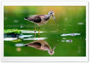 Water Bird HD Wide Wallpaper for Widescreen