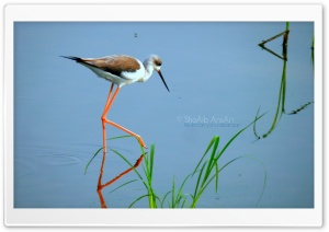 Water Bird - Shoaib Photography HD Wide Wallpaper for Widescreen