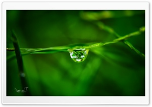 Water Drop on Grass HD Wide Wallpaper for Widescreen
