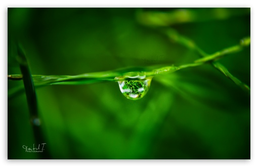 Water Drop on Grass ❤ 4K UHD Wallpaper for Wide 16:10 5:3 Widescreen WHXGA WQXGA WUXGA WXGA WGA ; 4K UHD 16:9 Ultra High Definition 2160p 1440p 1080p 900p 720p ; UHD 16:9 2160p 1440p 1080p 900p 720p ; Standard 4:3 5:4 3:2 Fullscreen UXGA XGA SVGA QSXGA SXGA DVGA HVGA HQVGA ( Apple PowerBook G4 iPhone 4 3G 3GS iPod Touch ) ; iPad 1/2/Mini ; Mobile 4:3 5:3 3:2 16:9 5:4 - UXGA XGA SVGA WGA DVGA HVGA HQVGA ( Apple PowerBook G4 iPhone 4 3G 3GS iPod Touch ) 2160p 1440p 1080p 900p 720p QSXGA SXGA ;