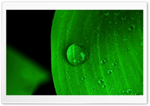 Water Drop on Green Leaf HD Wide Wallpaper for 4K UHD Widescreen desktop & smartphone