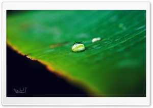Water Drop on Green Leaf HD Wide Wallpaper for Widescreen