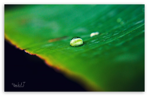 Water Drop on Green Leaf HD wallpaper for Wide 16:10 5:3 Widescreen WHXGA WQXGA WUXGA WXGA WGA ; HD 16:9 High Definition WQHD QWXGA 1080p 900p 720p QHD nHD ; UHD 16:9 WQHD QWXGA 1080p 900p 720p QHD nHD ; Standard 4:3 5:4 3:2 Fullscreen UXGA XGA SVGA QSXGA SXGA DVGA HVGA HQVGA devices ( Apple PowerBook G4 iPhone 4 3G 3GS iPod Touch ) ; Tablet 1:1 ; iPad 1/2/Mini ; Mobile 4:3 5:3 3:2 16:9 5:4 - UXGA XGA SVGA WGA DVGA HVGA HQVGA devices ( Apple PowerBook G4 iPhone 4 3G 3GS iPod Touch ) WQHD QWXGA 1080p 900p 720p QHD nHD QSXGA SXGA ;