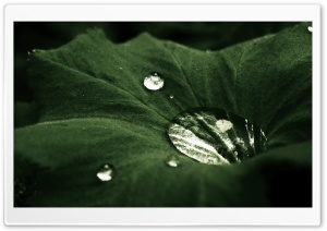 Water Drop On Leaf HD Wide Wallpaper for Widescreen