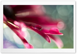 Water Drop On Pink Petal HD Wide Wallpaper for Widescreen
