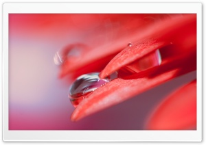Water Drop On Red Petal HD Wide Wallpaper for Widescreen