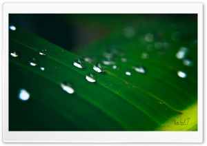 Water Drops HD Wide Wallpaper for Widescreen