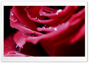 Water Drops Macro HD Wide Wallpaper for Widescreen