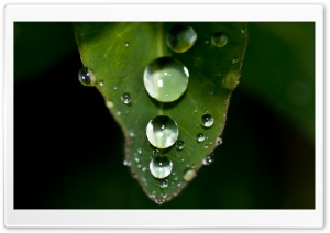 Water Drops On A Leaf HD Wide Wallpaper for Widescreen