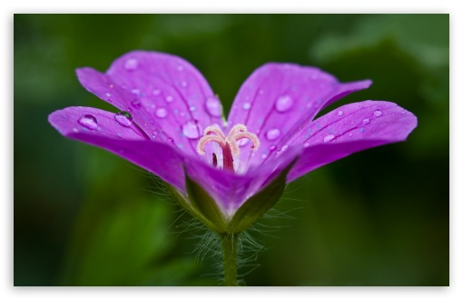 Фото цветы в росинках
