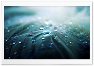 Water Drops On Feather Macro HD Wide Wallpaper for Widescreen