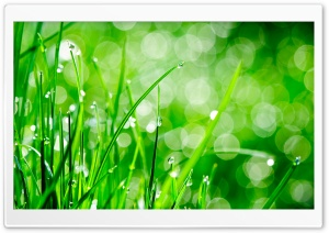 Water Drops On Grass HD Wide Wallpaper for Widescreen