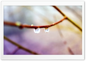 Water Drops on Twig, Macro HD Wide Wallpaper for Widescreen