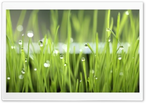 Water Drops Reflection HD Wide Wallpaper for Widescreen