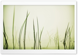 Water Grass HD Wide Wallpaper for Widescreen