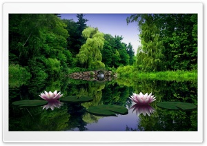 Water Lilies HD Wide Wallpaper for Widescreen