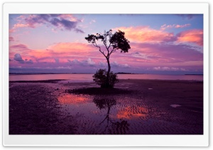 Water Tree HD Wide Wallpaper for Widescreen