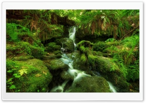 Waterfall Ferns Moss HD Wide Wallpaper for Widescreen