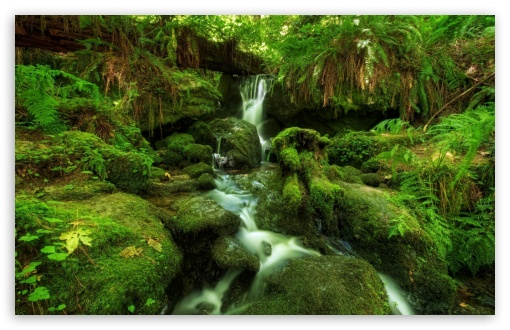 Waterfall Ferns Moss HD wallpaper for Wide 16:10 5:3 Widescreen WHXGA WQXGA WUXGA WXGA WGA ; HD 16:9 High Definition WQHD QWXGA 1080p 900p 720p QHD nHD ; Standard 4:3 5:4 3:2 Fullscreen UXGA XGA SVGA QSXGA SXGA DVGA HVGA HQVGA devices ( Apple PowerBook G4 iPhone 4 3G 3GS iPod Touch ) ; Tablet 1:1 ; iPad 1/2/Mini ; Mobile 4:3 5:3 3:2 16:9 5:4 - UXGA XGA SVGA WGA DVGA HVGA HQVGA devices ( Apple PowerBook G4 iPhone 4 3G 3GS iPod Touch ) WQHD QWXGA 1080p 900p 720p QHD nHD QSXGA SXGA ; Dual 16:10 5:3 4:3 5:4 WHXGA WQXGA WUXGA WXGA WGA UXGA XGA SVGA QSXGA SXGA ;