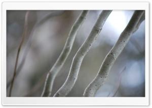 Wavy Branches Ultra HD Wallpaper for 4K UHD Widescreen desktop, tablet & smartphone
