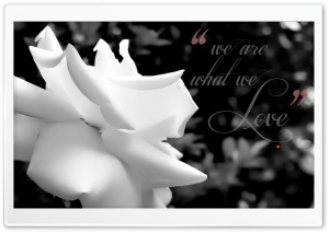 We are what We Love _ Monochrome Soft HD Wide Wallpaper for Widescreen
