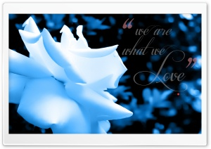 We are what We Love _blue tint HD Wide Wallpaper for Widescreen