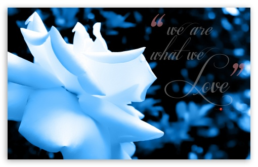 We are what We Love _blue tint HD wallpaper for Wide 16:10 5:3 Widescreen WHXGA WQXGA WUXGA WXGA WGA ; HD 16:9 High Definition WQHD QWXGA 1080p 900p 720p QHD nHD ; UHD 16:9 WQHD QWXGA 1080p 900p 720p QHD nHD ; Standard 3:2 Fullscreen DVGA HVGA HQVGA devices ( Apple PowerBook G4 iPhone 4 3G 3GS iPod Touch ) ; Mobile 5:3 3:2 16:9 - WGA DVGA HVGA HQVGA devices ( Apple PowerBook G4 iPhone 4 3G 3GS iPod Touch ) WQHD QWXGA 1080p 900p 720p QHD nHD ;