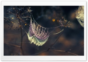 Web Dew Bokeh HD Wide Wallpaper for Widescreen