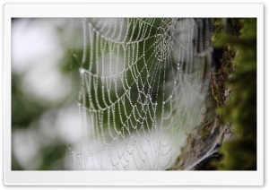 Webs HD Wide Wallpaper for Widescreen