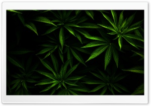 Weed HD Wide Wallpaper for Widescreen