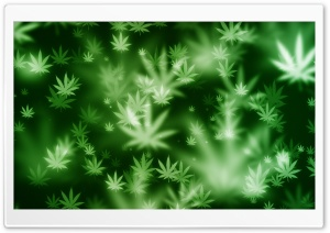 Weed Bokeh HD Wide Wallpaper for Widescreen