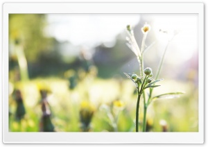 Weeds Bokeh HD Wide Wallpaper for Widescreen