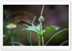 Wet Bee HD Wide Wallpaper for Widescreen