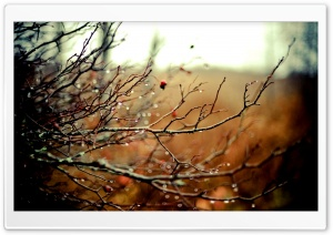 Wet Branches HD Wide Wallpaper for Widescreen