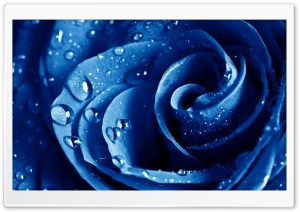Wet Drops Blue Rose HD Wide Wallpaper for Widescreen