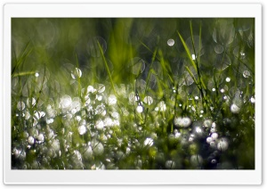 Wet Grass HD Wide Wallpaper for Widescreen
