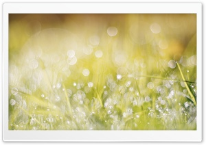 Wet Grass, Bokeh HD Wide Wallpaper for Widescreen