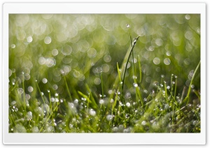 Wet Grass Bokeh HD Wide Wallpaper for 4K UHD Widescreen desktop & smartphone