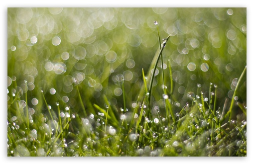 Wet Grass Bokeh ❤ 4K UHD Wallpaper for Wide 16:10 5:3 Widescreen WHXGA WQXGA WUXGA WXGA WGA ; 4K UHD 16:9 Ultra High Definition 2160p 1440p 1080p 900p 720p ; Standard 4:3 5:4 3:2 Fullscreen UXGA XGA SVGA QSXGA SXGA DVGA HVGA HQVGA ( Apple PowerBook G4 iPhone 4 3G 3GS iPod Touch ) ; Smartphone 5:3 WGA ; Tablet 1:1 ; iPad 1/2/Mini ; Mobile 4:3 5:3 3:2 16:9 5:4 - UXGA XGA SVGA WGA DVGA HVGA HQVGA ( Apple PowerBook G4 iPhone 4 3G 3GS iPod Touch ) 2160p 1440p 1080p 900p 720p QSXGA SXGA ; Dual 16:10 5:3 16:9 4:3 5:4 WHXGA WQXGA WUXGA WXGA WGA 2160p 1440p 1080p 900p 720p UXGA XGA SVGA QSXGA SXGA ;