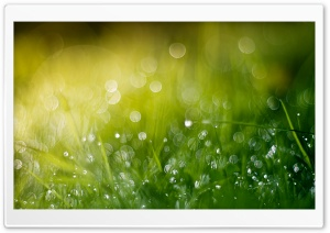 Wet Grass Bokeh, Summer HD Wide Wallpaper for Widescreen