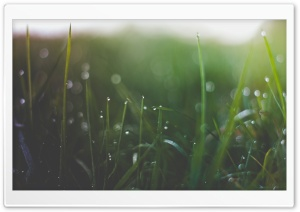 Wet Grass Threads HD Wide Wallpaper for Widescreen