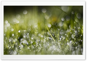 Wet Green Grass HD Wide Wallpaper for Widescreen
