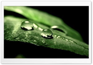 Wet Green Leaf, Macro HD Wide Wallpaper for Widescreen