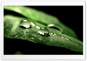 Wet Green Leaf, Macro HD Wide Wallpaper for Widescreen