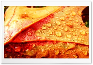 Wet Leaf HD Wide Wallpaper for 4K UHD Widescreen desktop & smartphone
