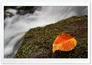 Wet Leaf And Moss HD Wide Wallpaper for Widescreen