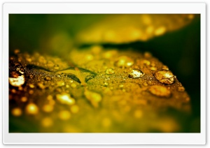 Wet Leaf, Bokeh HD Wide Wallpaper for Widescreen